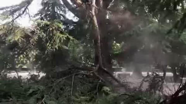 Paura alla Passeggiata, ramo cade nel cuore dei giardini pubblici
